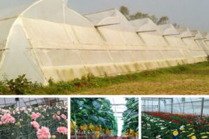 greenhouse farming
