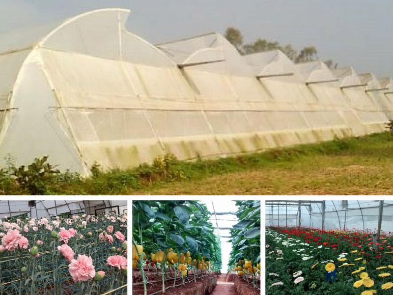 Green House Cultivation in Goa