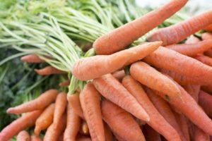 Carrot farming